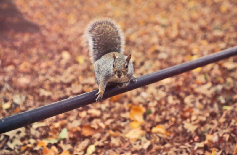 Squirrel on Pole